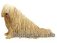 Комондор (венгерская овчарка)
